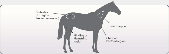 Horse Injection Guide