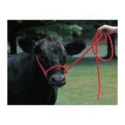 Red Cattle Poly Halters