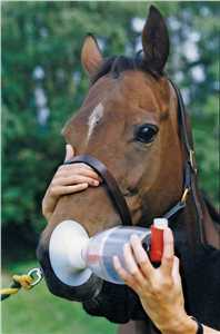 Equine Haler Inhalation Device