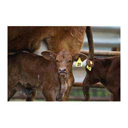 Global Numbered Large (Calf) ID Ear Tags Item # 16832