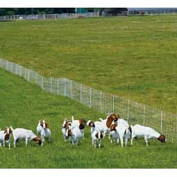 ElectroStop Plus Electric Netting Double Spike for Sheep & Goats Premier Sheep Supplies