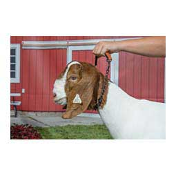 Oil Rubbed Pronged Chain Goat Collar Item # 41108