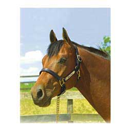 """1"""" Oversize Premium Leather Show Horse Halter w/Name Plate Engraving Perri's Leather"""