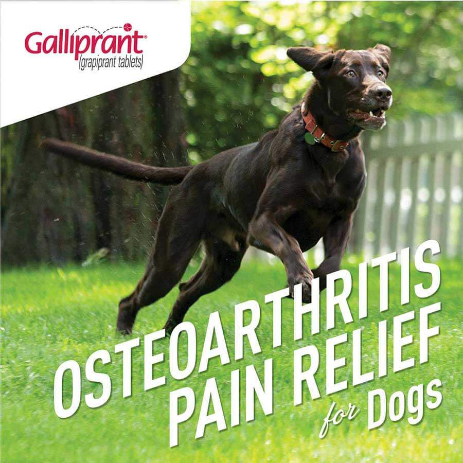Galliprant For Dogs 20 Mg 30 Ct Item 1382rx