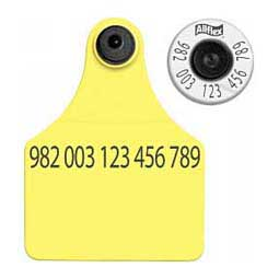 HDX EID Calf Ear Tags + Large Blank Matched Set Yellow 25 ct - Item # 18387