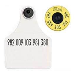 FDX EID Calf Ear Tags + Large Blank Matched Set White 25 ct - Item # 18395