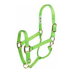 Lime Zest Personalized Hot Halter