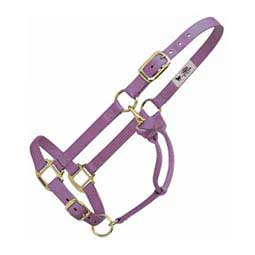 Personalized Hot Horse Halter Lavender - Item # 22892