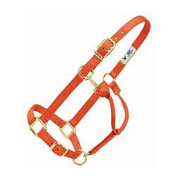 Personalized Hot Horse Halter Orange - Item # 22892