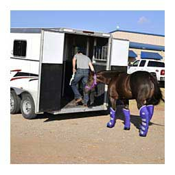 Horse Trailering Shipping Boots Purple/Silver - Item # 34652