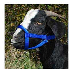 Nylon Goat Halter Blue Doe - Item # 40248