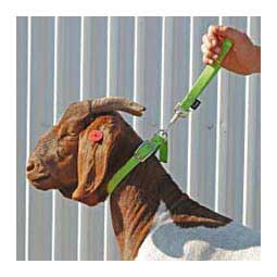 Nylon Goat Leads Lime Zest 8'' loop (10'' overall) - Item # 40251