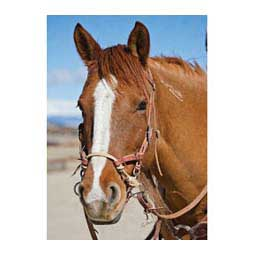 Justin Dunn Bitless Horse Bridle Hermann Oak Russet - Item # 41549