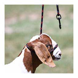 Snap Lead Halter for Goats and Sheep Advantage - Item # 45242