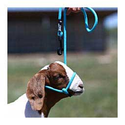 Snap Lead Halter for Goats and Sheep Blue Tide - Item # 45242