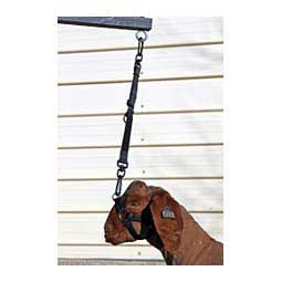 Elevate Adjustable Bungee Tie for Goats and Sheep Black - Item # 45245